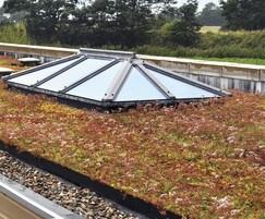 Enviromat sedum matting on green roof