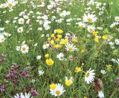 Meadowmat Traditional Meadow Mix