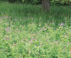 Meadowmat Woodland Shade Mix