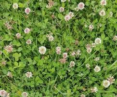 Meadowmat Species Mix
