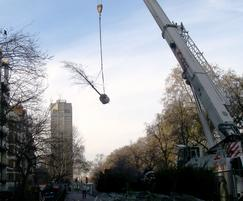 Urban tree transplanting
