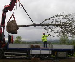 Tree transplanting specialists