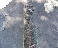Air Spades remove soil without damaging tree roots