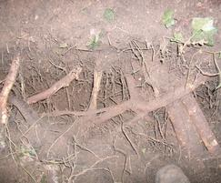 Air Spade inspection of tree roots