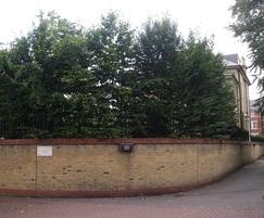 Hornbeam pleached screening trees