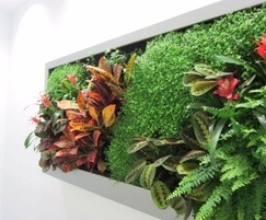 Vertiss modular green wall system