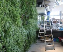 Installation of Vertiss interior green wall