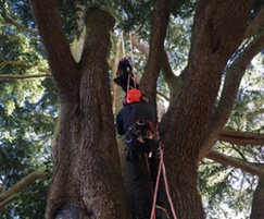 Care and maintenance of trees