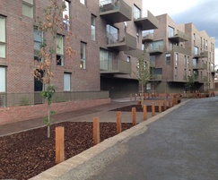 Hardwood bollards for regeneration project