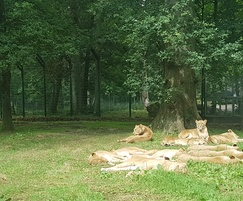 Zaun: High security fencing for Longleat lion enclosure
