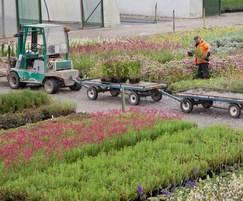 Picking operation of herbaceous perennials and shrubs