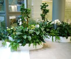 Planted up freestanding planters in Paris