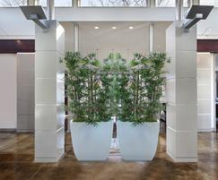 Bamboo in linik tall planters