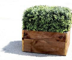 A completed buxus box