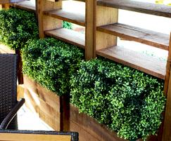 Close up of the buxus boxes