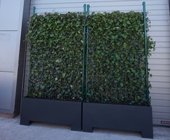 Instant screening hedge in bespoke planters