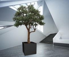 Julius Cube planter GRP lightweight