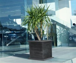 Kensington planter for roof garden