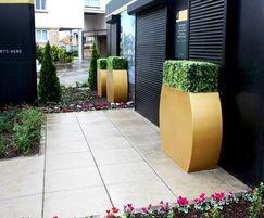 Replica Buxus hedging