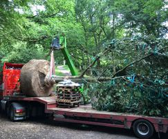 Large Oak being transported to Hertfordshire