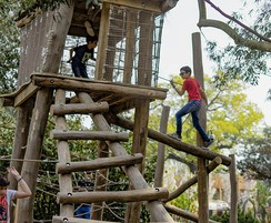 Climbing frame with log ladder for access