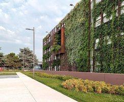 Green wall planting screening car park