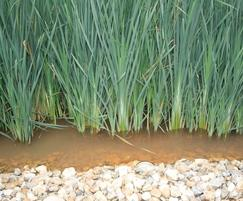 Reedbeds treat leachate at Veolia landfill site