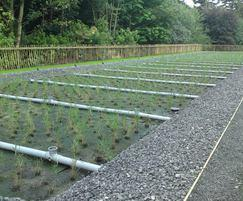 Oct 2009 - reedbed completed, ready to receive effluent