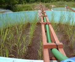 Trial reedbeds treating ferric drinking water sludge