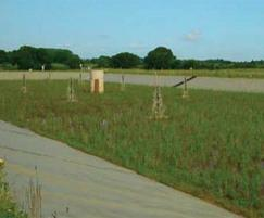 Reed beds treatment for drinking water at Hanningfield