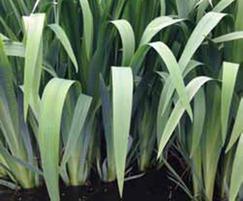ARM reedbed plants, Highland Spring