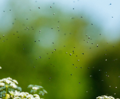 Insecticide for flies, wasps, mosquitoes