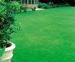UK bred grasses