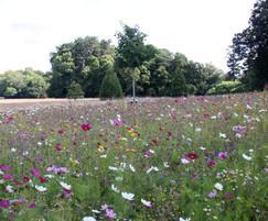 UK native wildflower mixtures