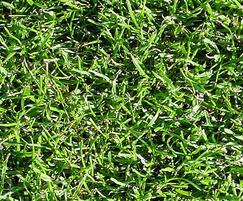A24 grass seed mixture