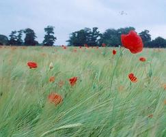 WF1 flowering meadow seed mixture
