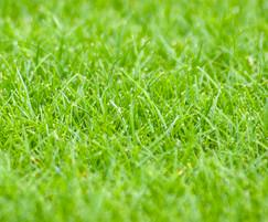 Germinal Amenity: Revised ryegrass mix offers improved fineness of leaf