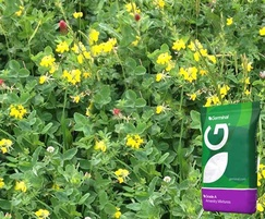 Legume and clover