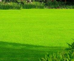 A24 grade 'A' Wear & Tear grass seed