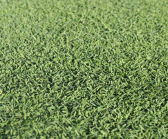 Germinal Amenity: ForeFront grass seed mixture for better golf greens