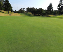 Germinal Amenity: Germinal launches new bentgrass mixture for golf greens
